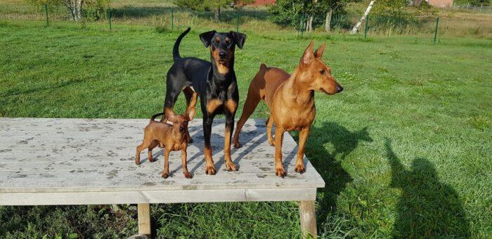 Tania, Nikki och Plommon